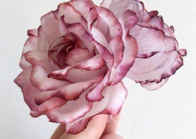 blush rose silk organza